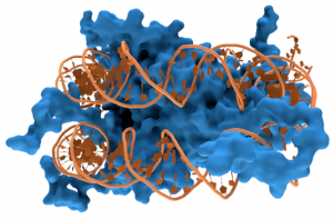 512px-nucleosome1